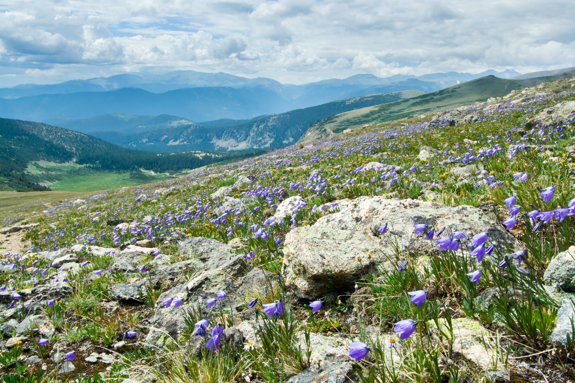 Best Beginner Wildflower Hikes in Breckenridge CO