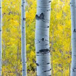 Best Places to See Aspen Colors in Breck
